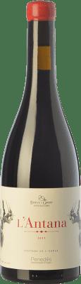 12,95 € Envío gratis | Vino tinto Esteve i Gibert L'Antana Crianza D.O. Penedès Cataluña España Merlot Botella 75 cl